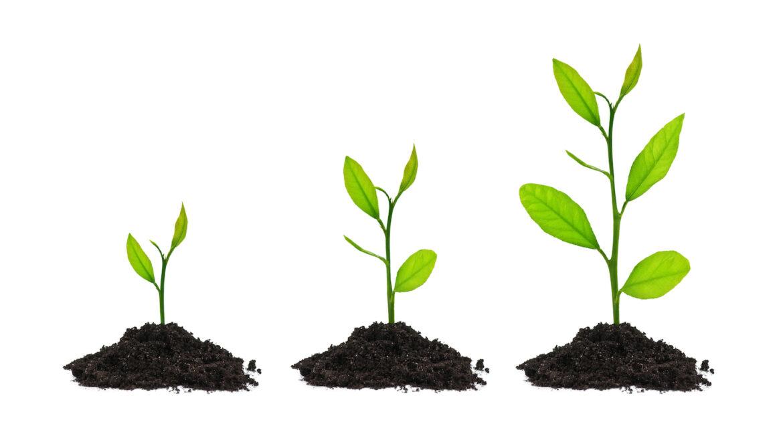 3 ways to grow clinic
